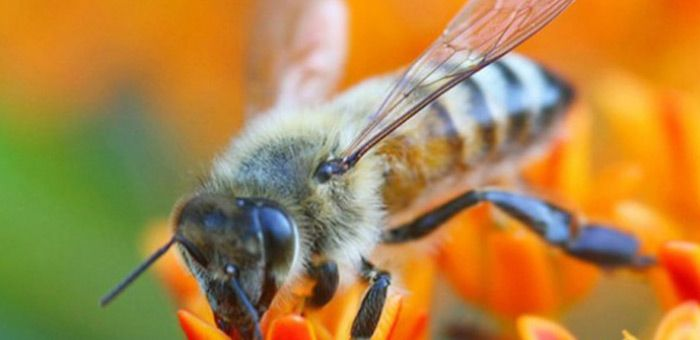 bees vs computers